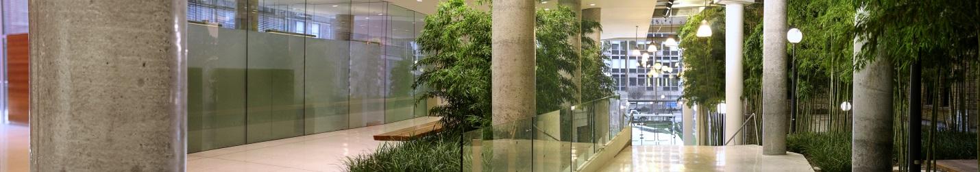 CCBR bamboo corridor